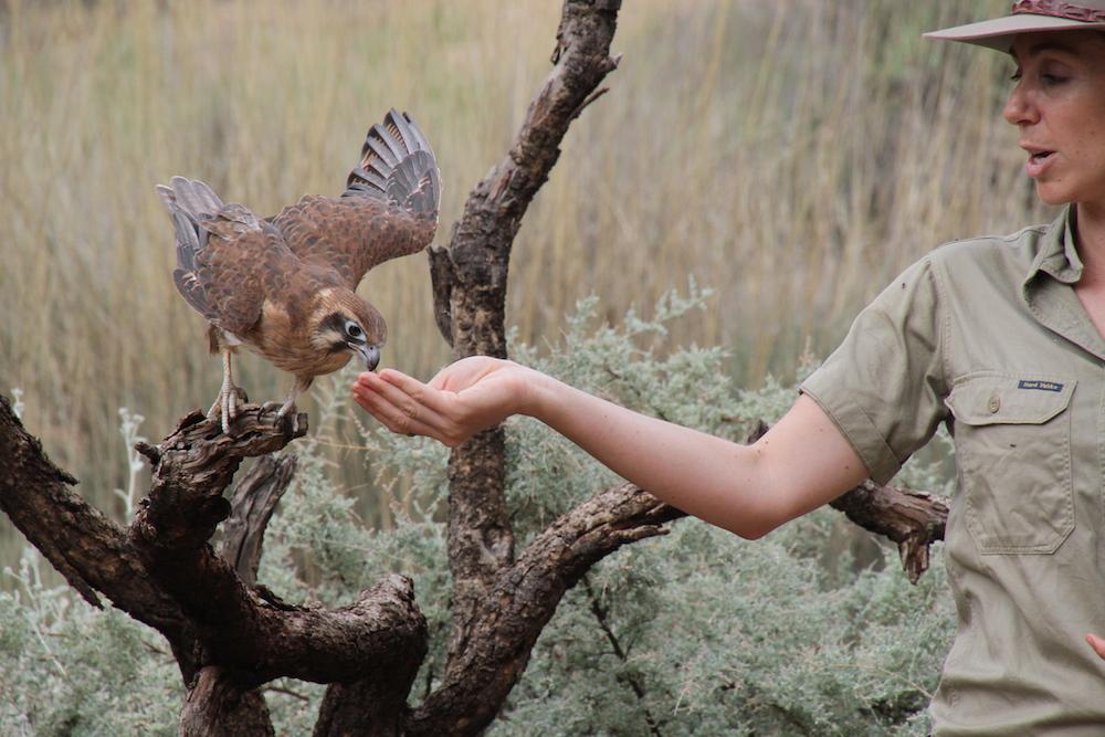 desertpark-birdshow.jpg