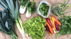 June 2016 Sample Vegetable Share