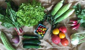 August 2016 Sample Vegetable Share