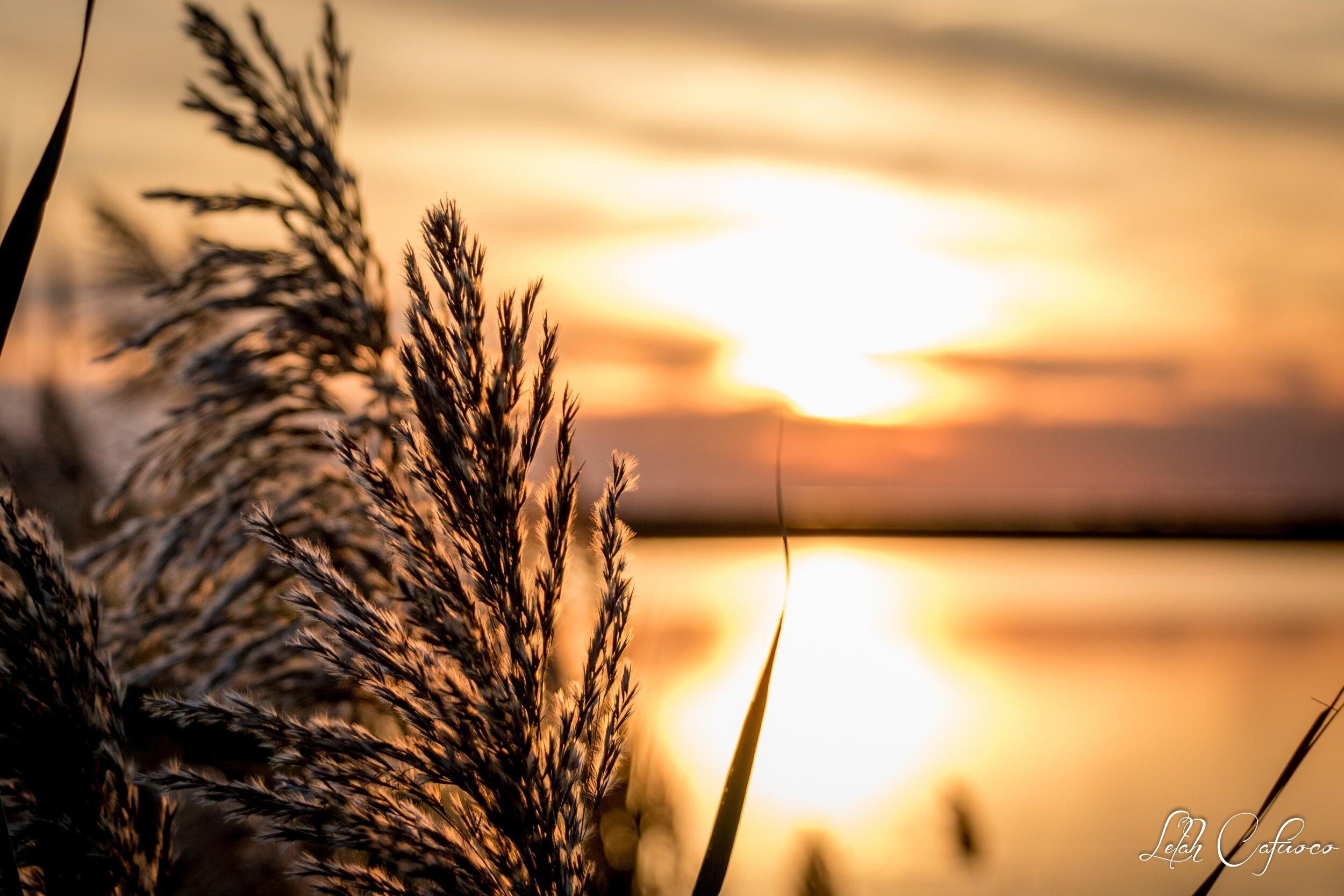 cedar beach marina sunset oct.jpg