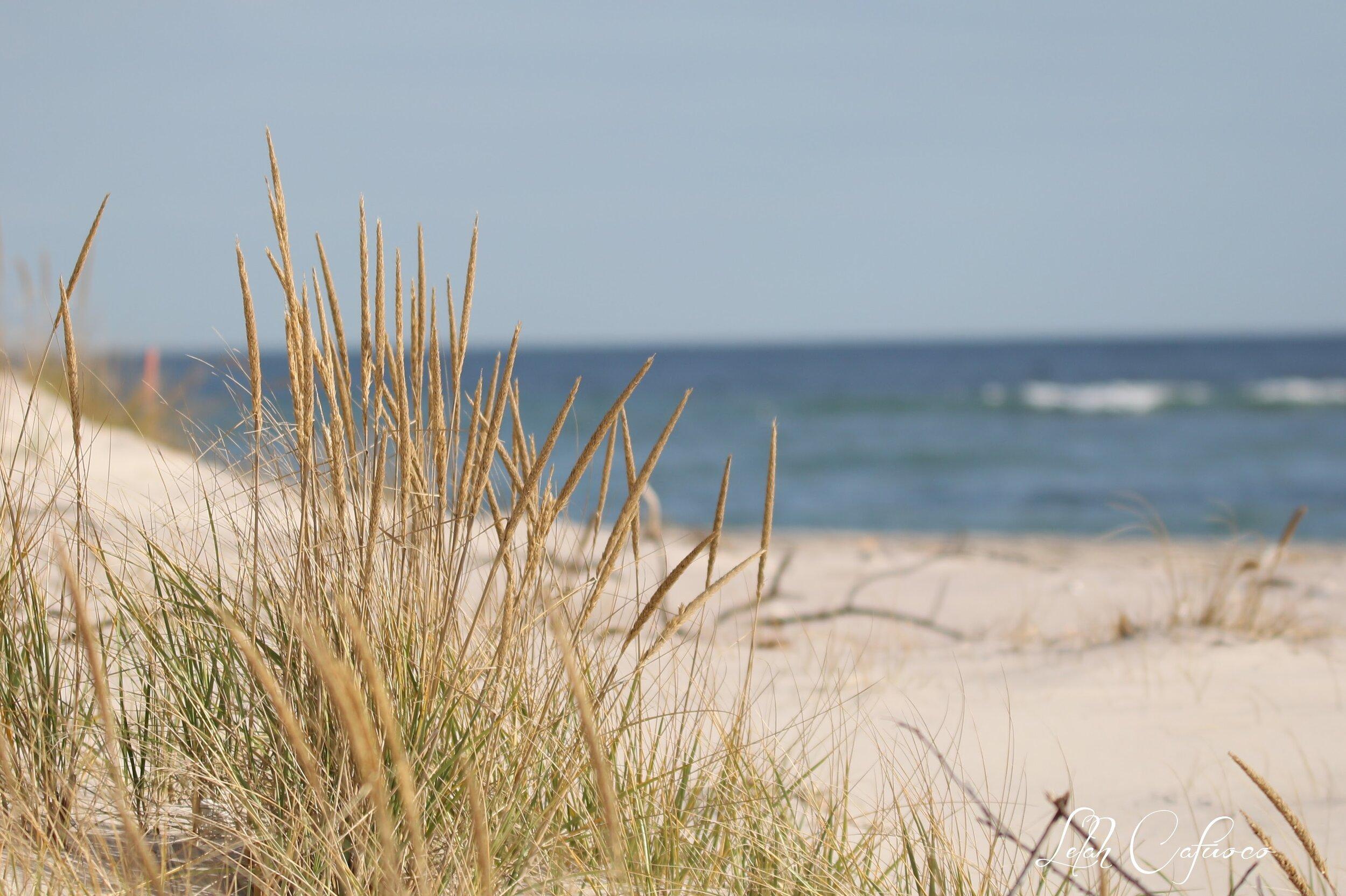 dune grass and ocean in bg.jpg
