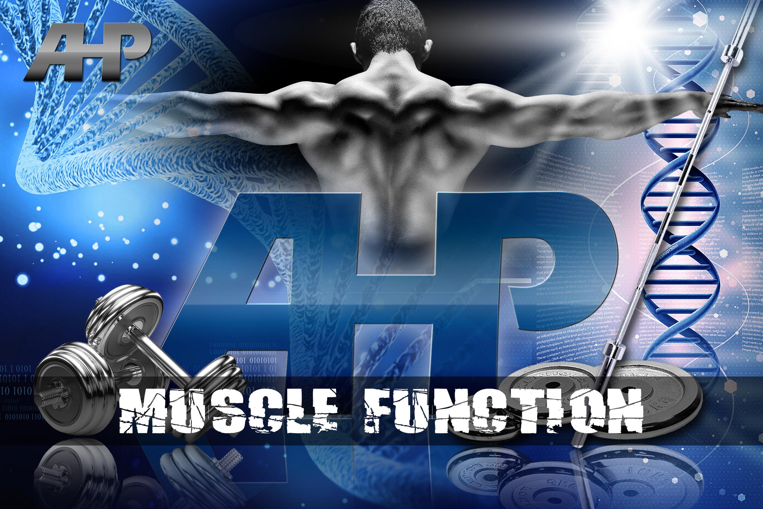 Muscle Function (AHP).jpg