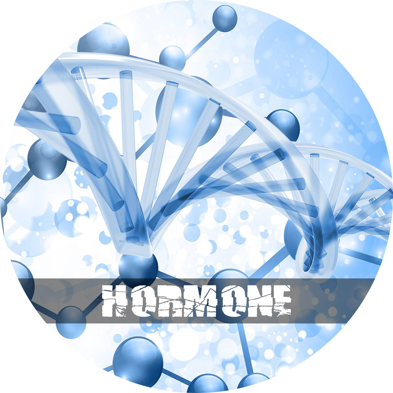 Hormone Regulation Circle - AHP.jpg