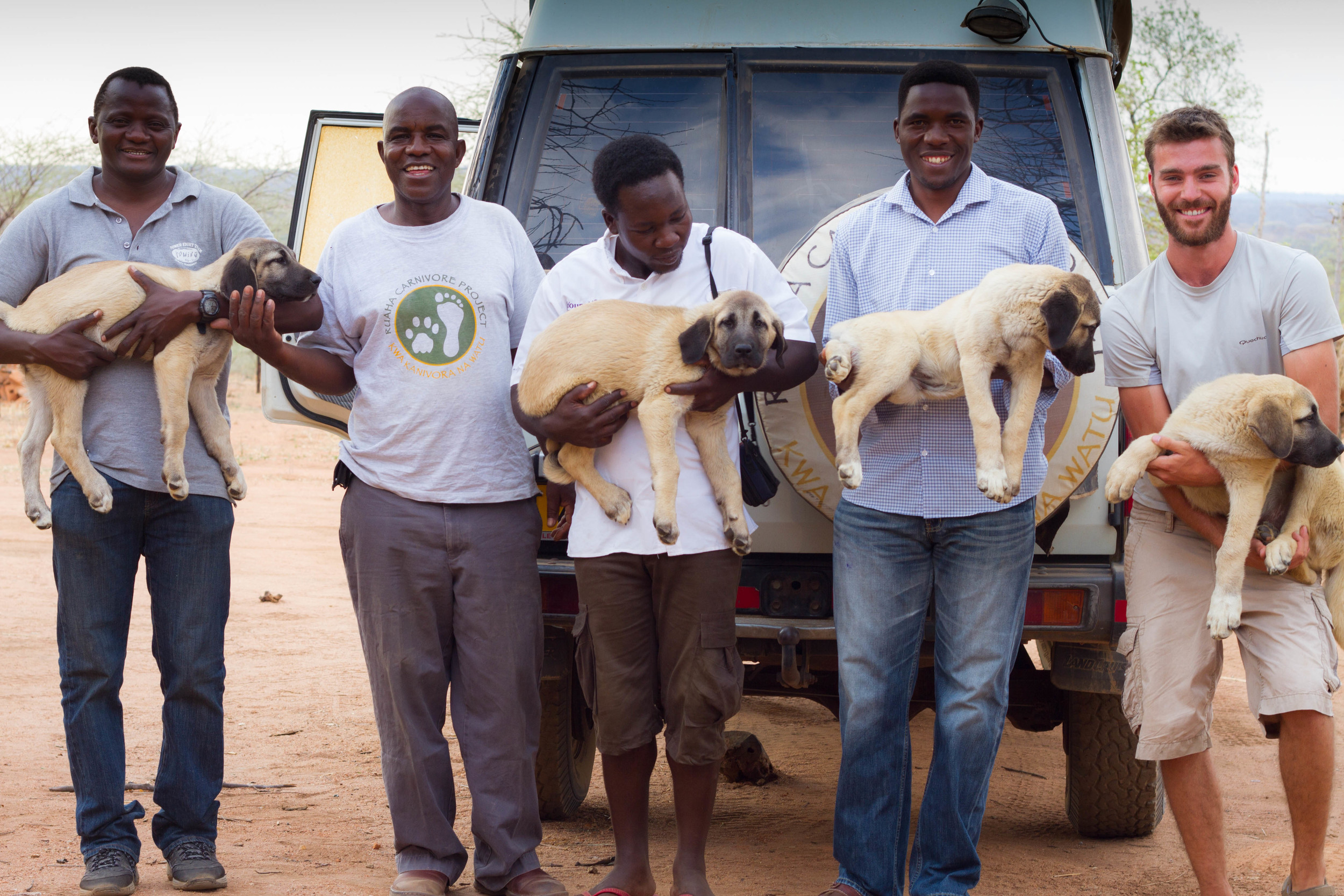 Livestock Guardian Dogs from Ruaha Carnivore Project