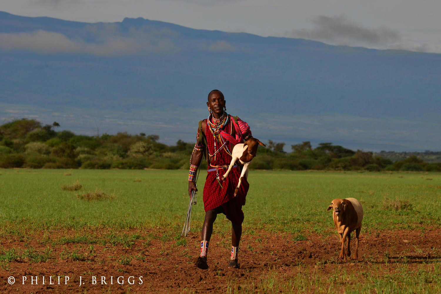 Lion Guardian recovering lost livestock