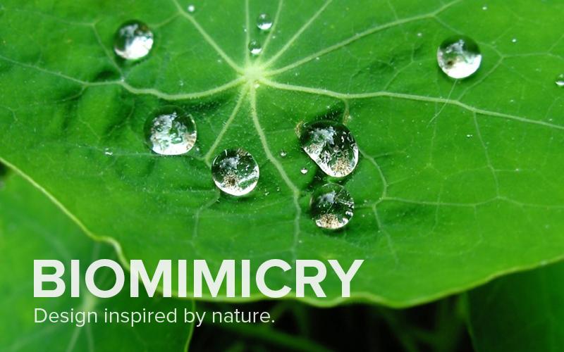 Self-Cleaning Lotus Leaf - Sites at Penn State