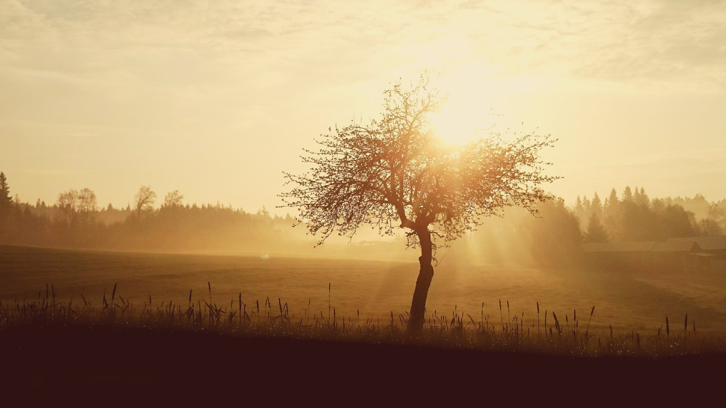 countryside-dark-dawn-163391.jpg