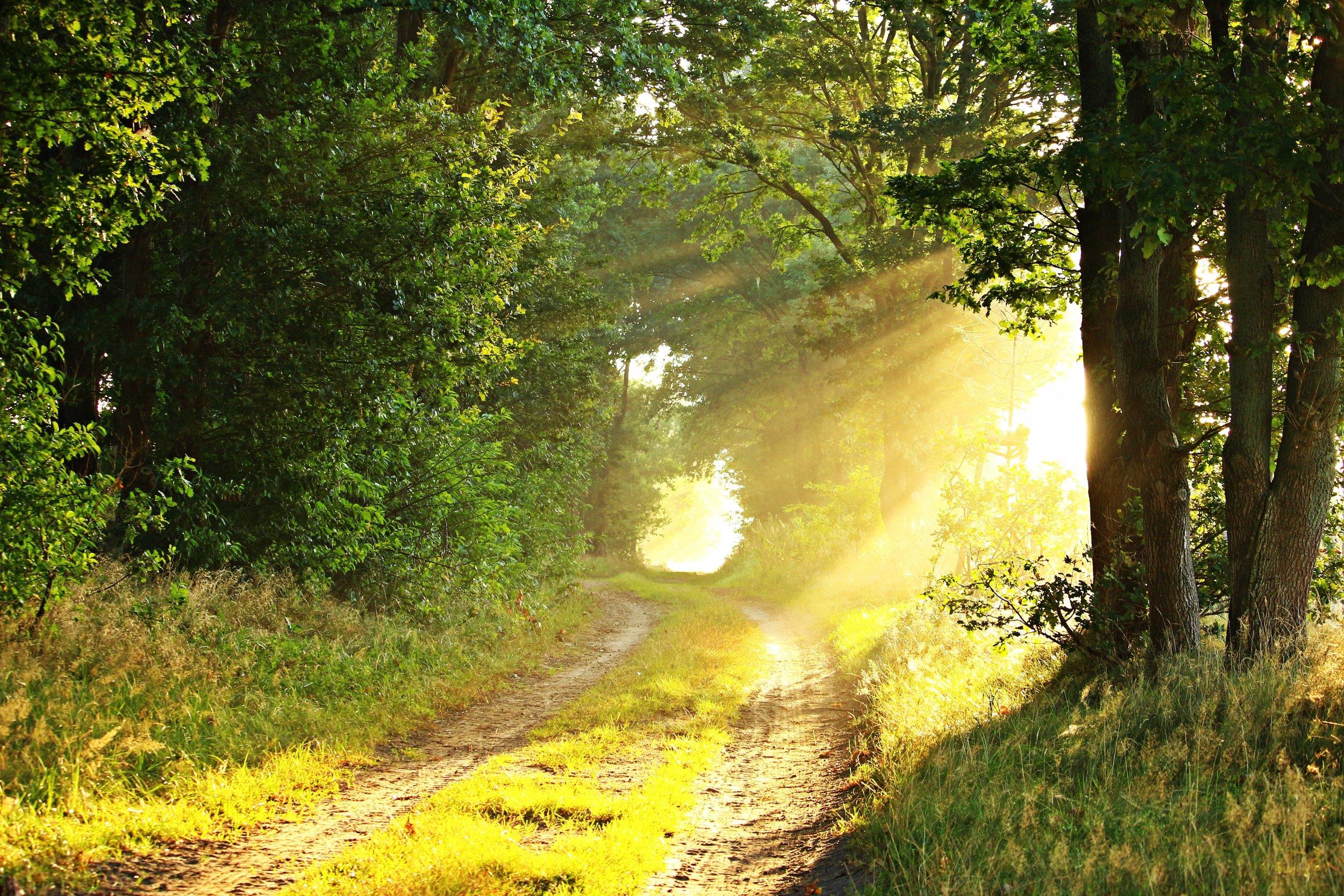 dirt-road-environment-foggy-209756.jpg