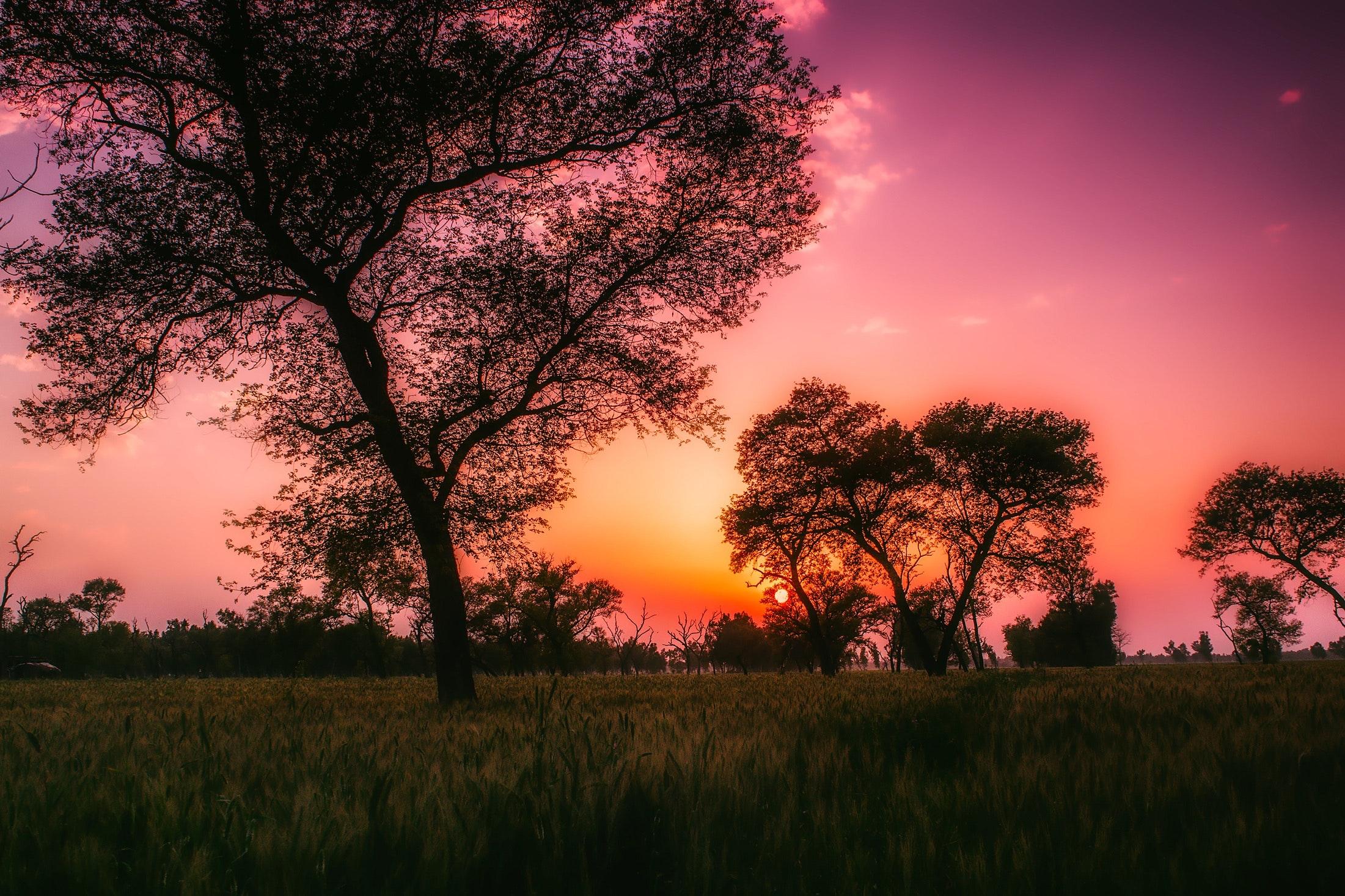 backlit-beautiful-dawn-290534.jpg