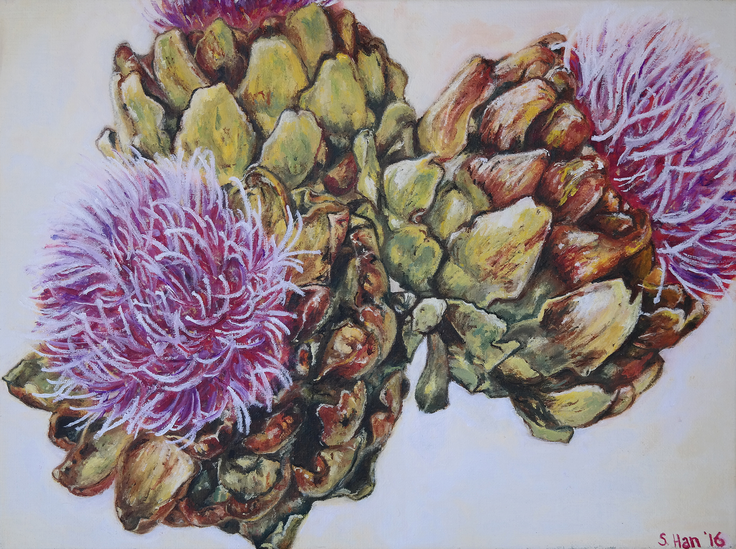 Flowering artichokes