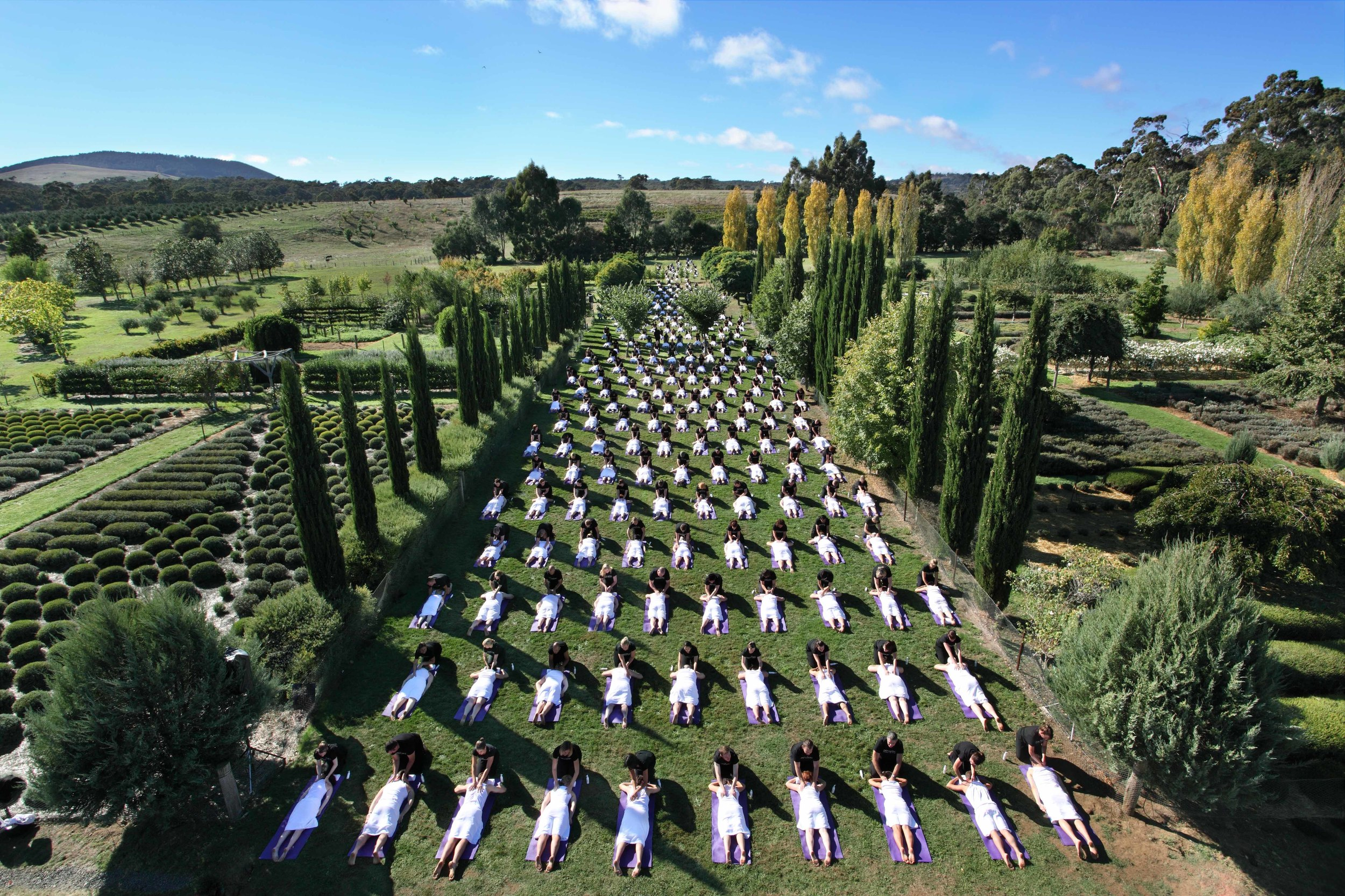 Daylesford Massage en Masse Campaign – World record for most simultaneous massage – Location: Daylesford Lavendar Farm