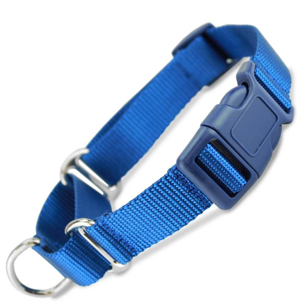 Martingale collar, buckle -available upon request with training package. *Comes in different colors.