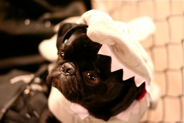 Max in a shark costume