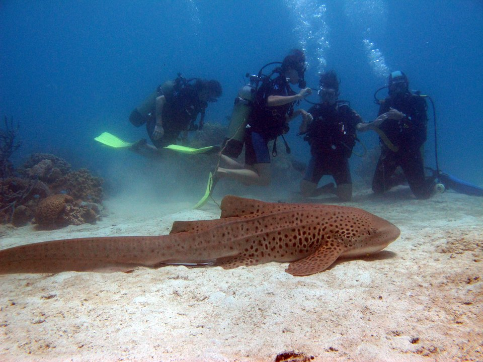 4 Scuba divers study a big fish on the ocean floor in Nosy Be, Madagascar