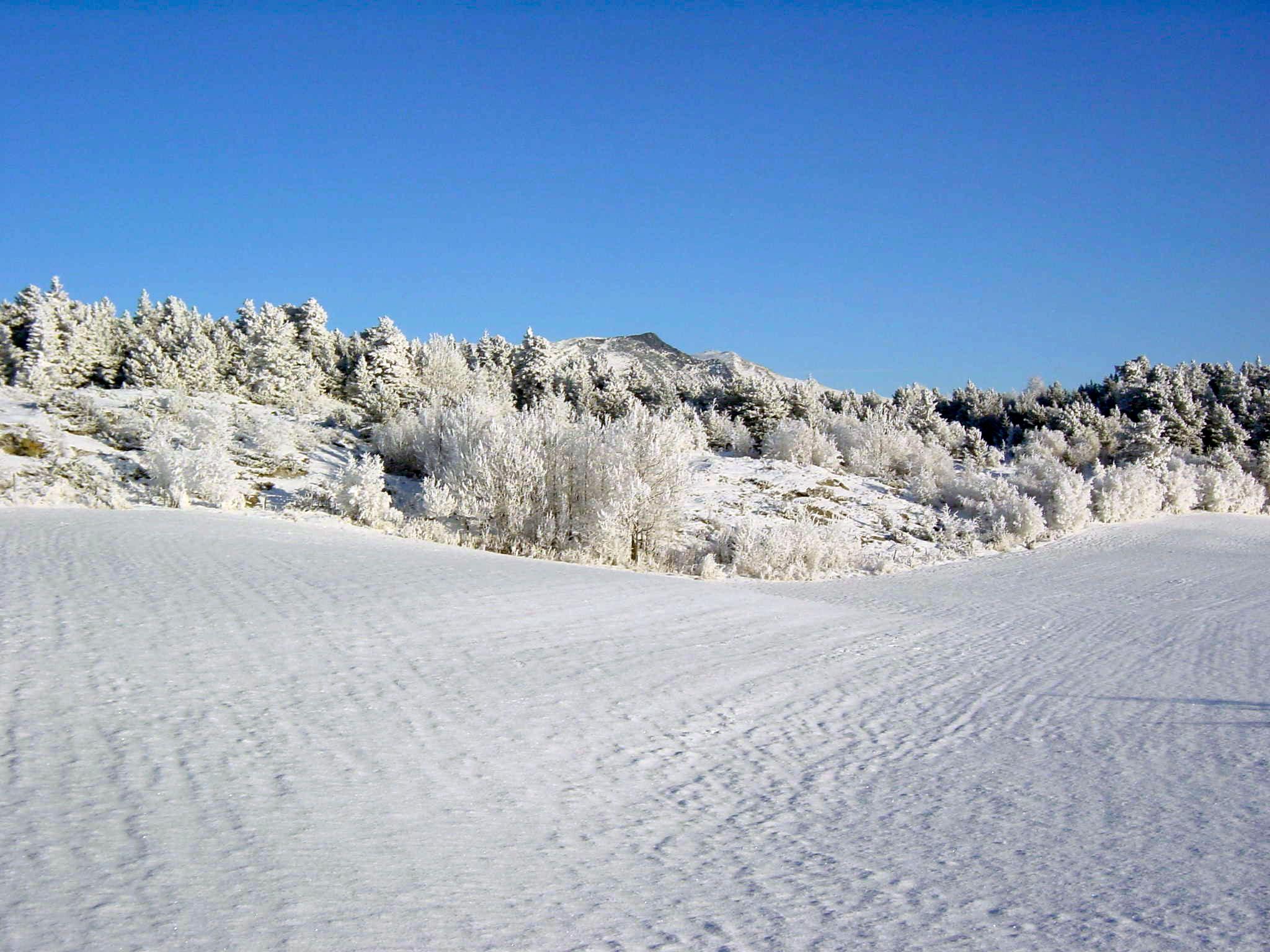 Blessom Vinter.jpg