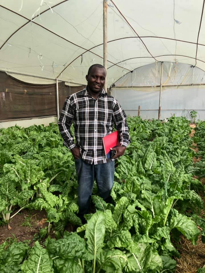 Did you know we have two greenhouses at Shelter? Our staff and boys plant many crops throughout the year, and everything we produce is completely organic and chemical-free. And our greenhouses go a long way in keeping 50 boys fed!  The spinach we planted in our greenhouse last month is now thriving, thanks to the watchful eye of Paul, one of our dedicated staff members.