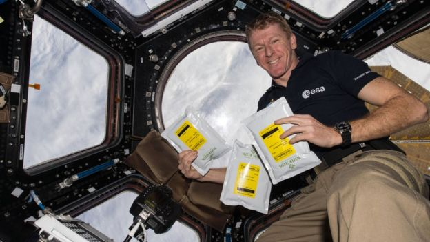 Tim Peake on the ISS with the Rocket seeds (image ESA/NASA)