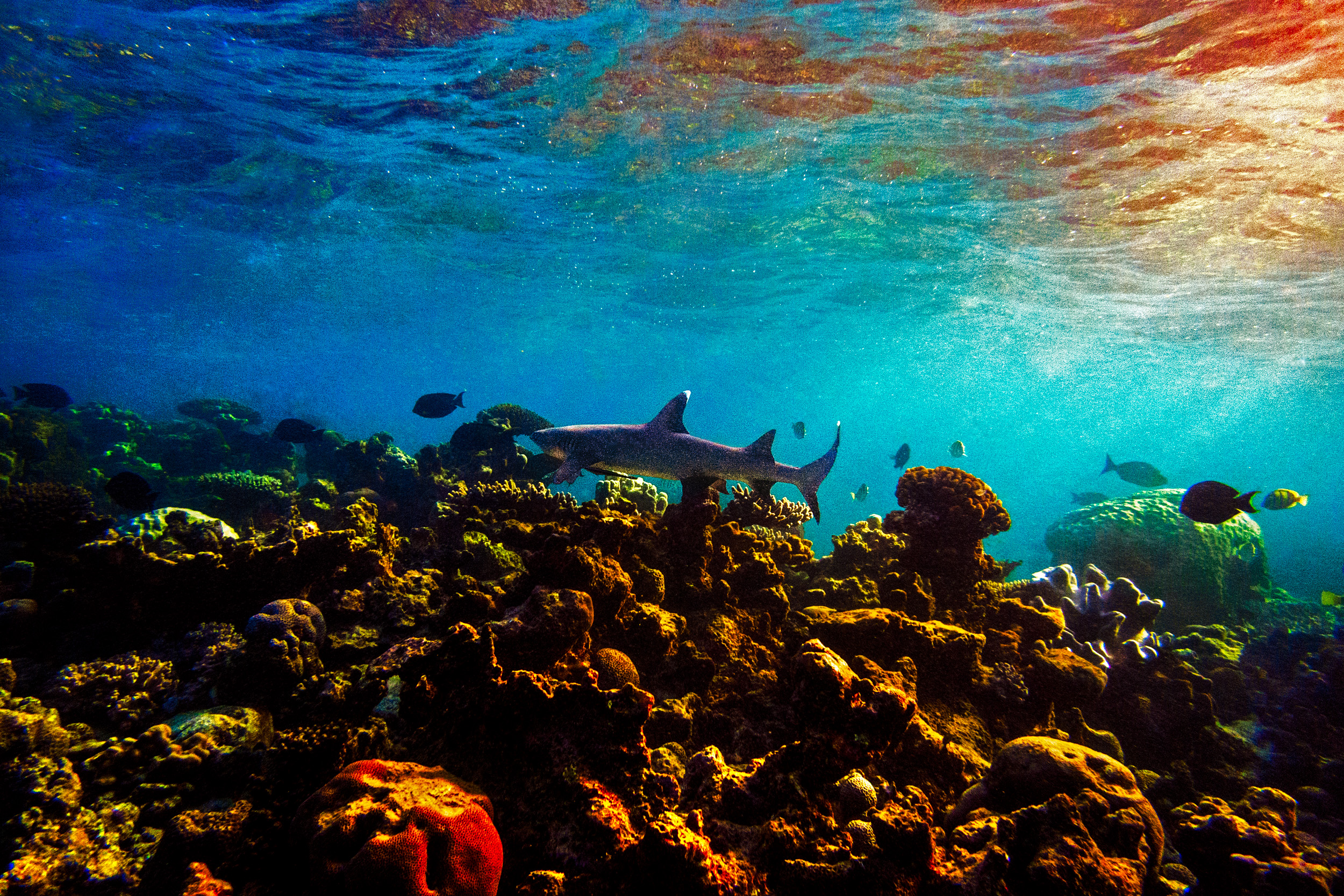 Spyrides_Kyle_Ningaloo_Reef_Sal_Salis.13.5.2016Spyrides_Kyle_White_Reef_Swimming_Over_Coral_colors_1_P5131897.jpg