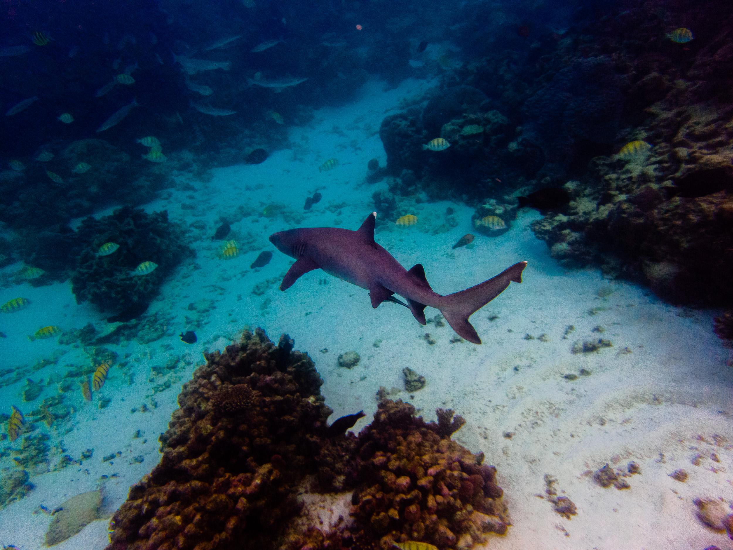 Spyrides_Kyle_Ningaloo_Reef_Sal_Salis.13.5.2016P5141897.jpg