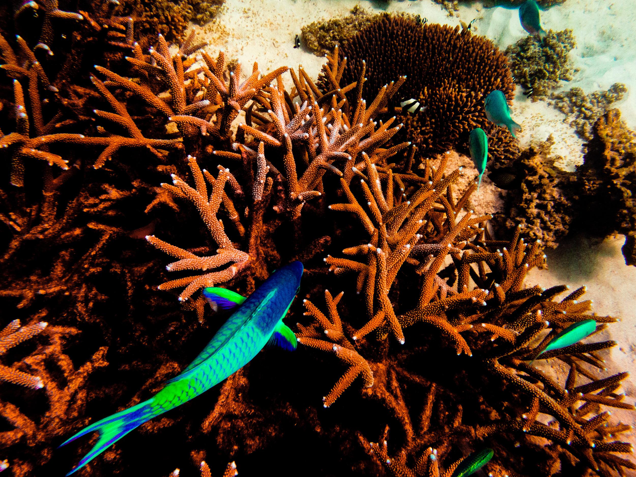 Spyrides_Kyle_Ningaloo_Reef_Sal_Salis.13.5.2016P5121697.jpg