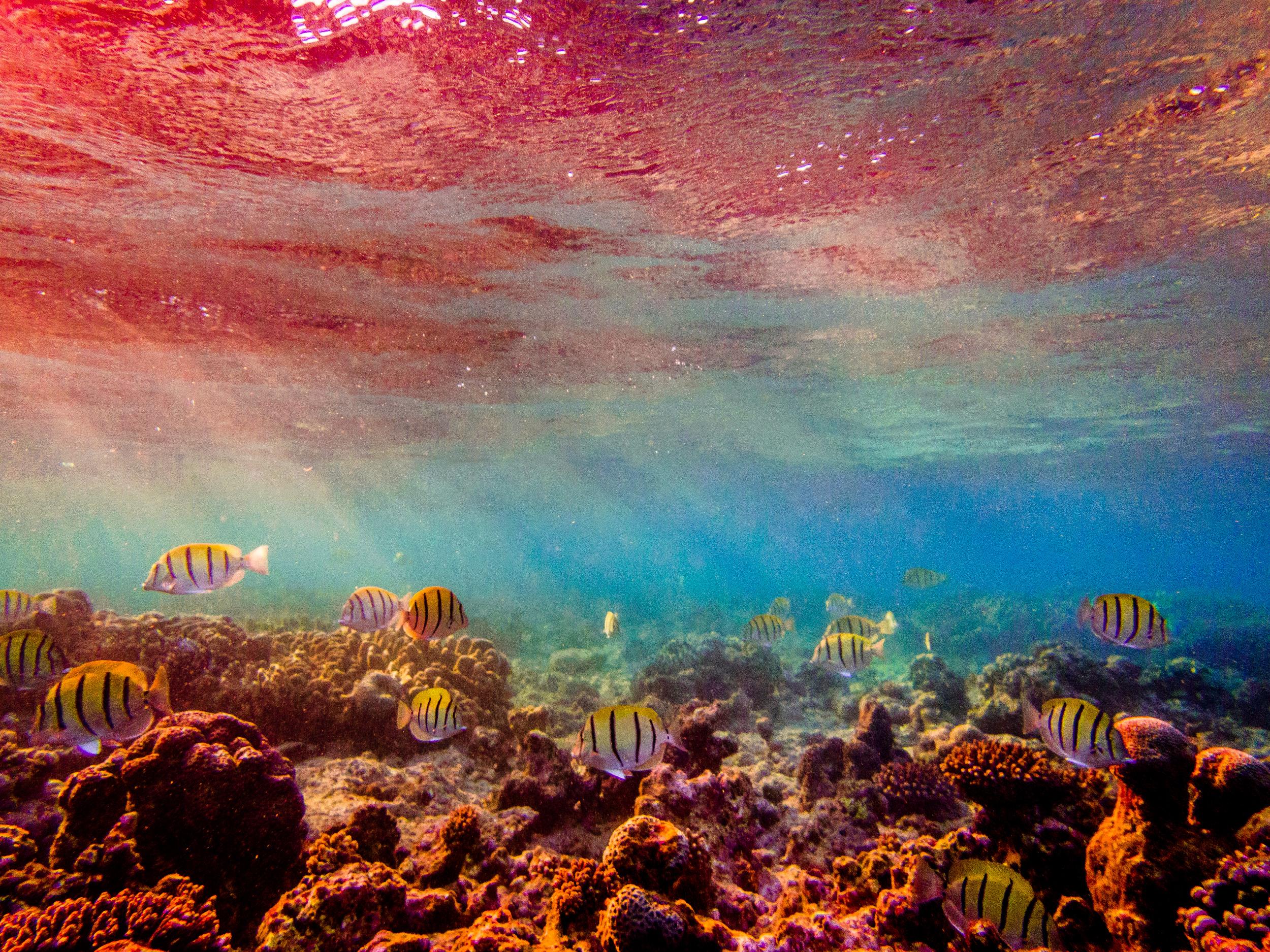 Spyrides_Kyle_Ningaloo_Reef_Sal_Salis.13.5.2016P5131847.jpg