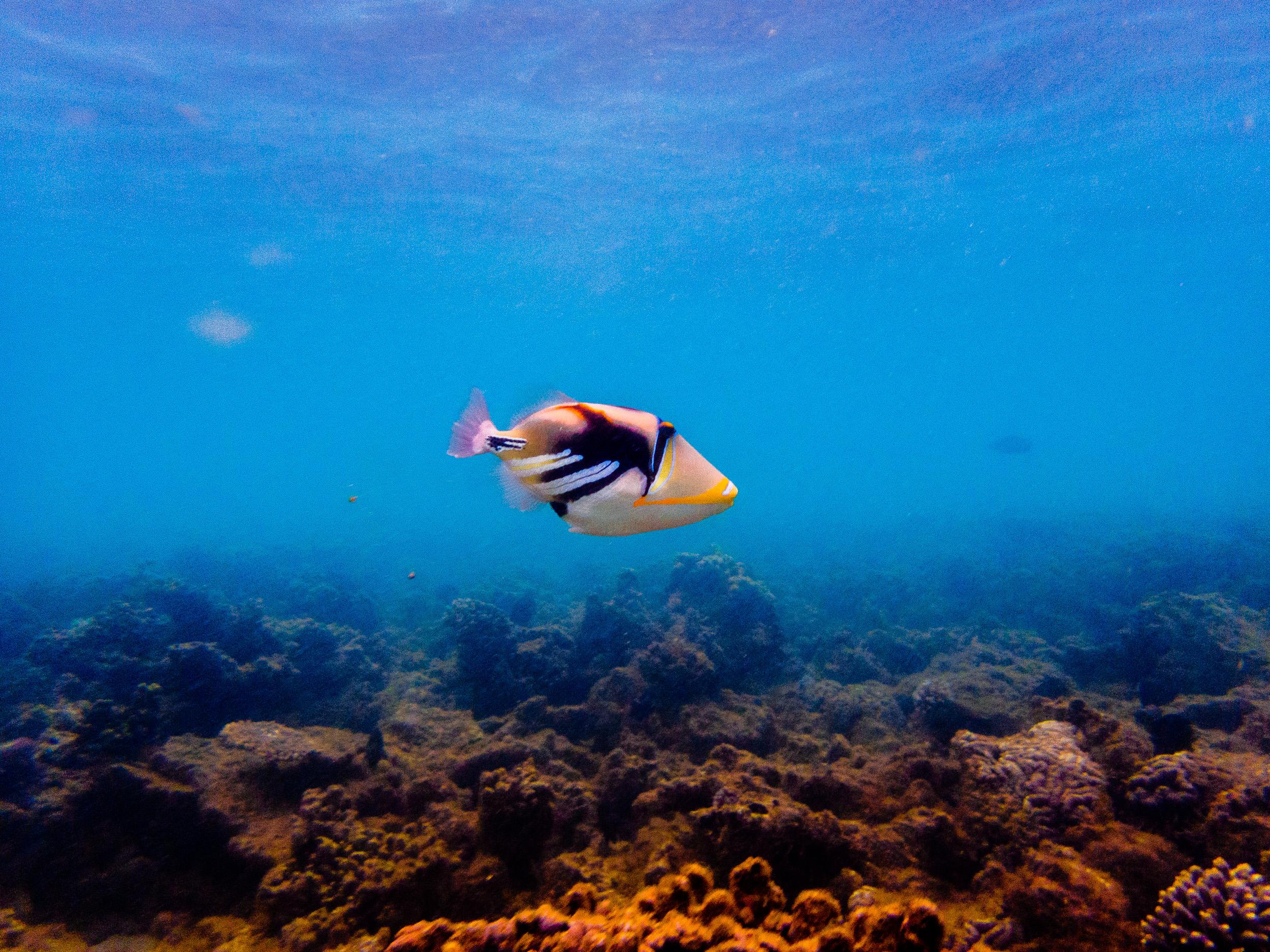 Spyrides_Kyle_Ningaloo_Reef_Sal_Salis.13.5.2016P5132429.jpg