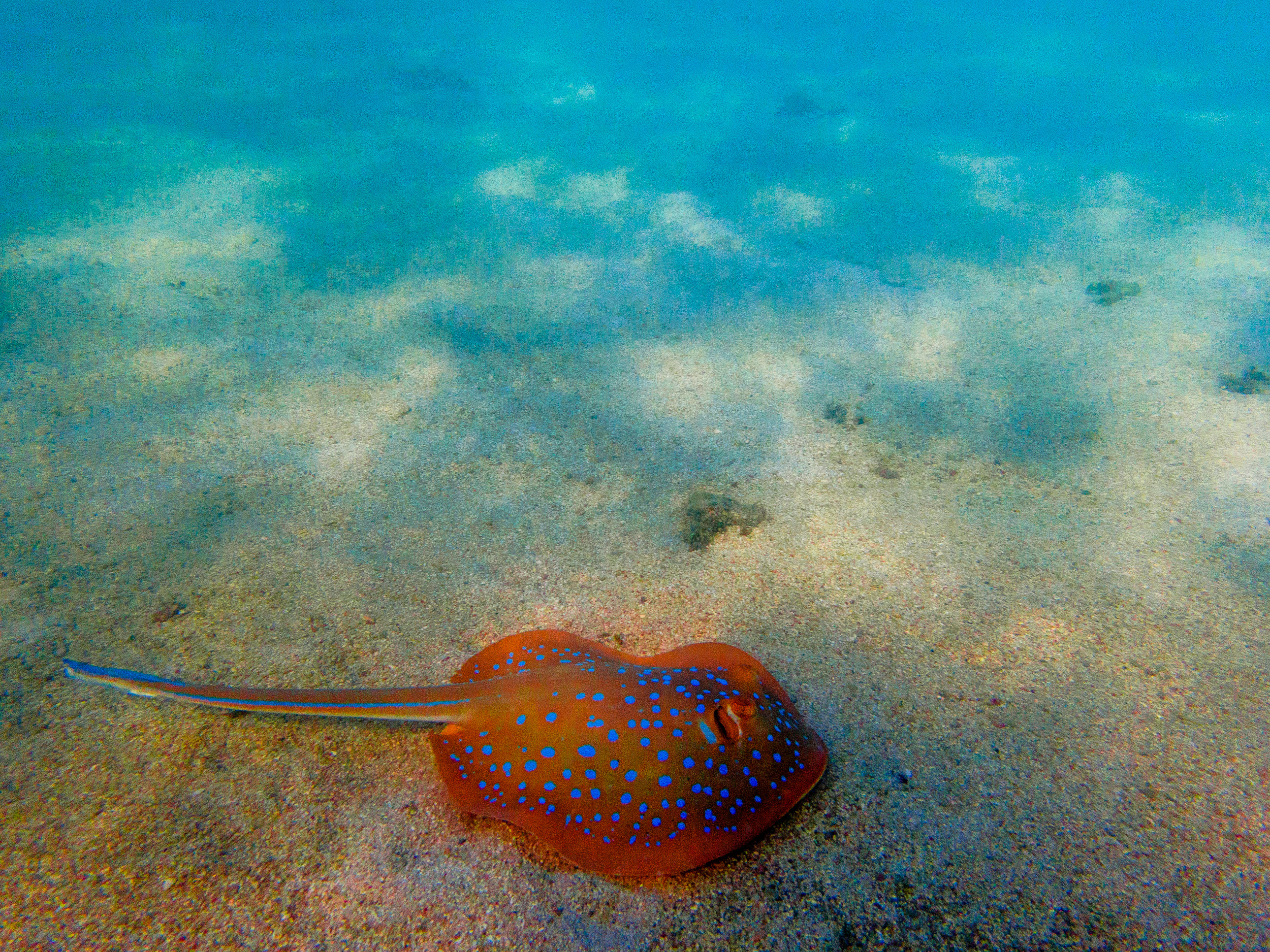 Spyrides_Kyle_Ningaloo_Reef_Sal_Salis.13.5.2016P5111236.jpg