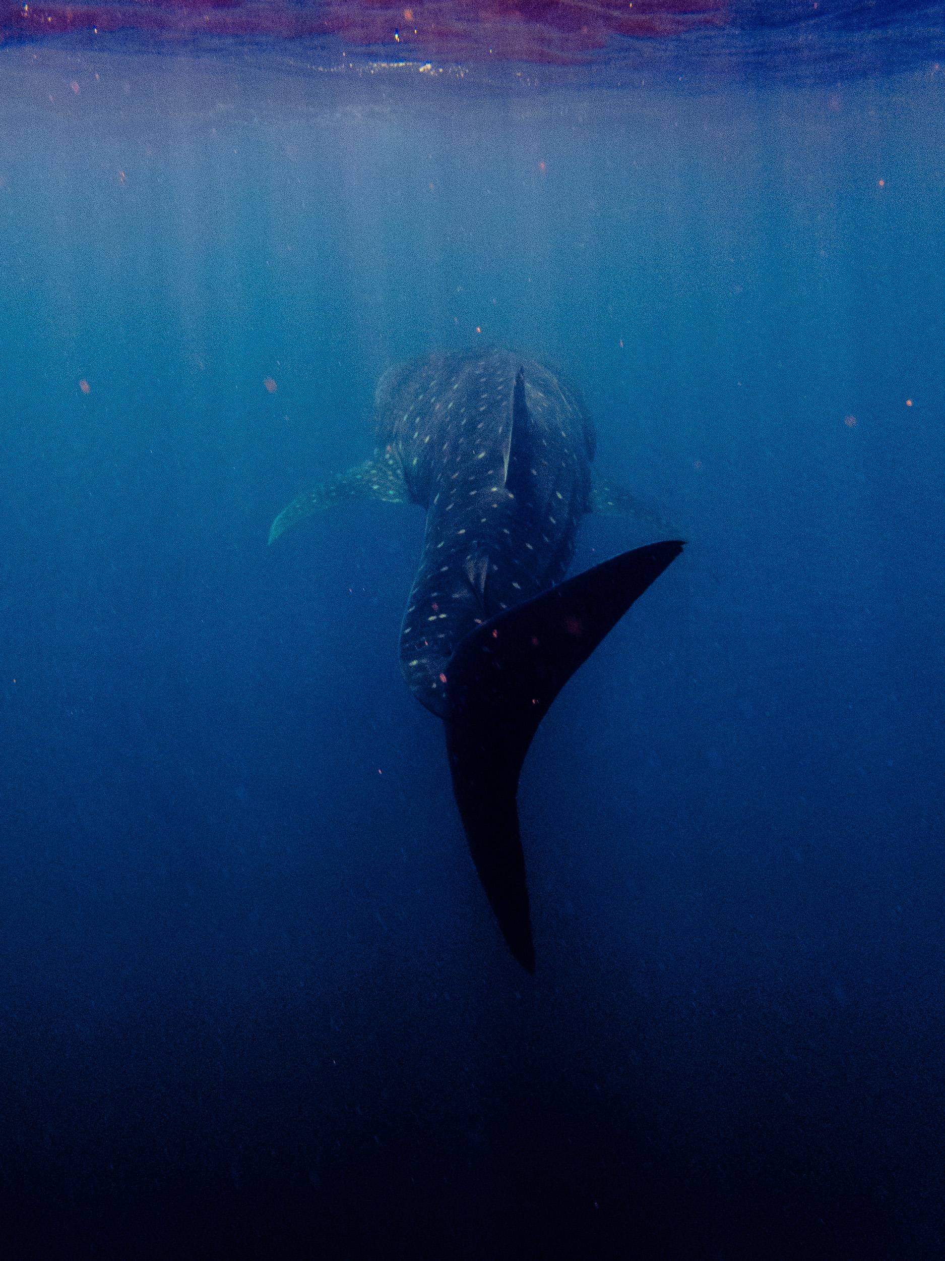Spyrides_Kyle_Ningaloo_Reef_Sal_Salis.13.5.2016P5121400.jpg