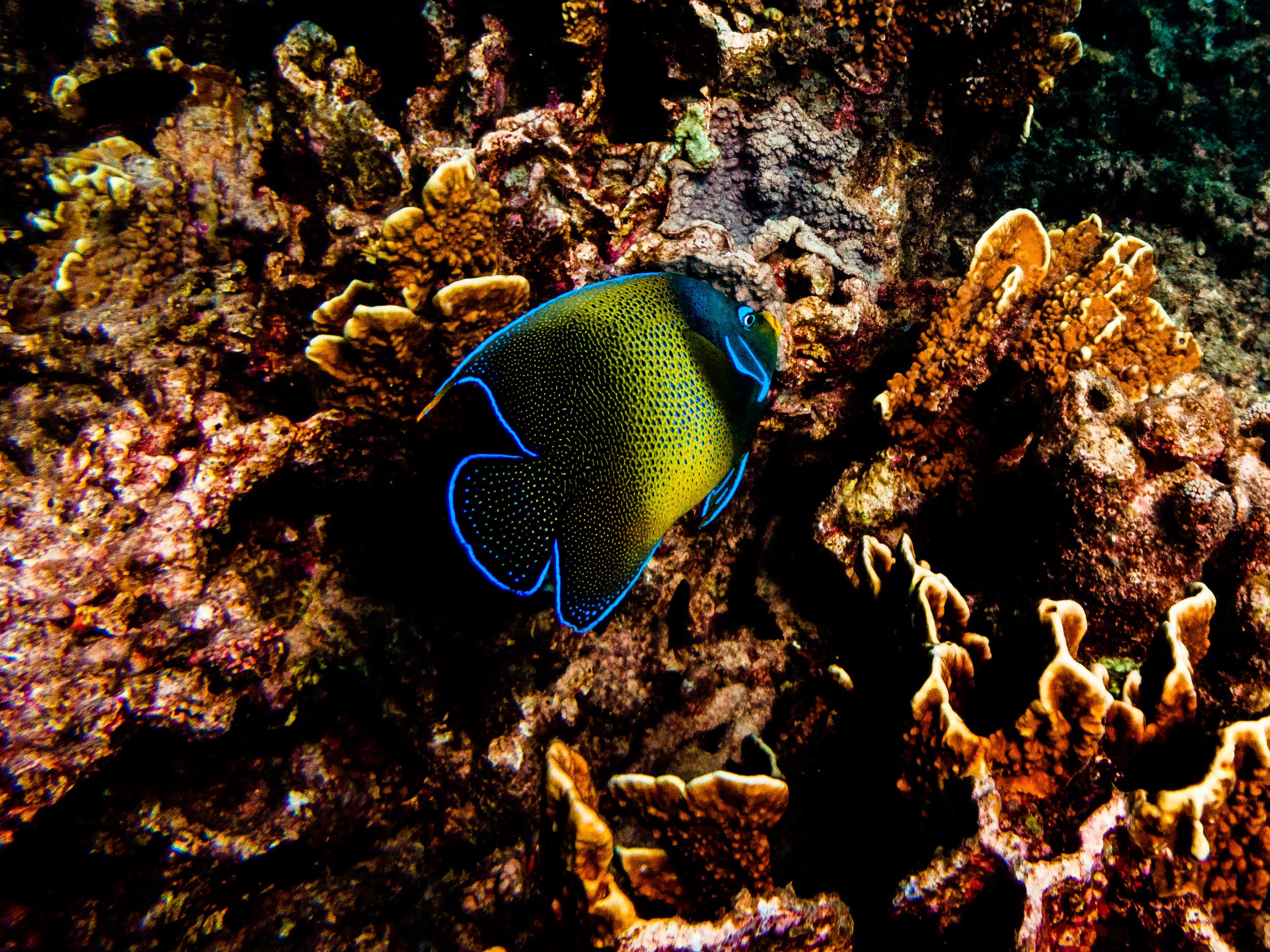 Spyrides_Kyle_Ningaloo_Reef_Sal_Salis.13.5.2016P5121584.jpg