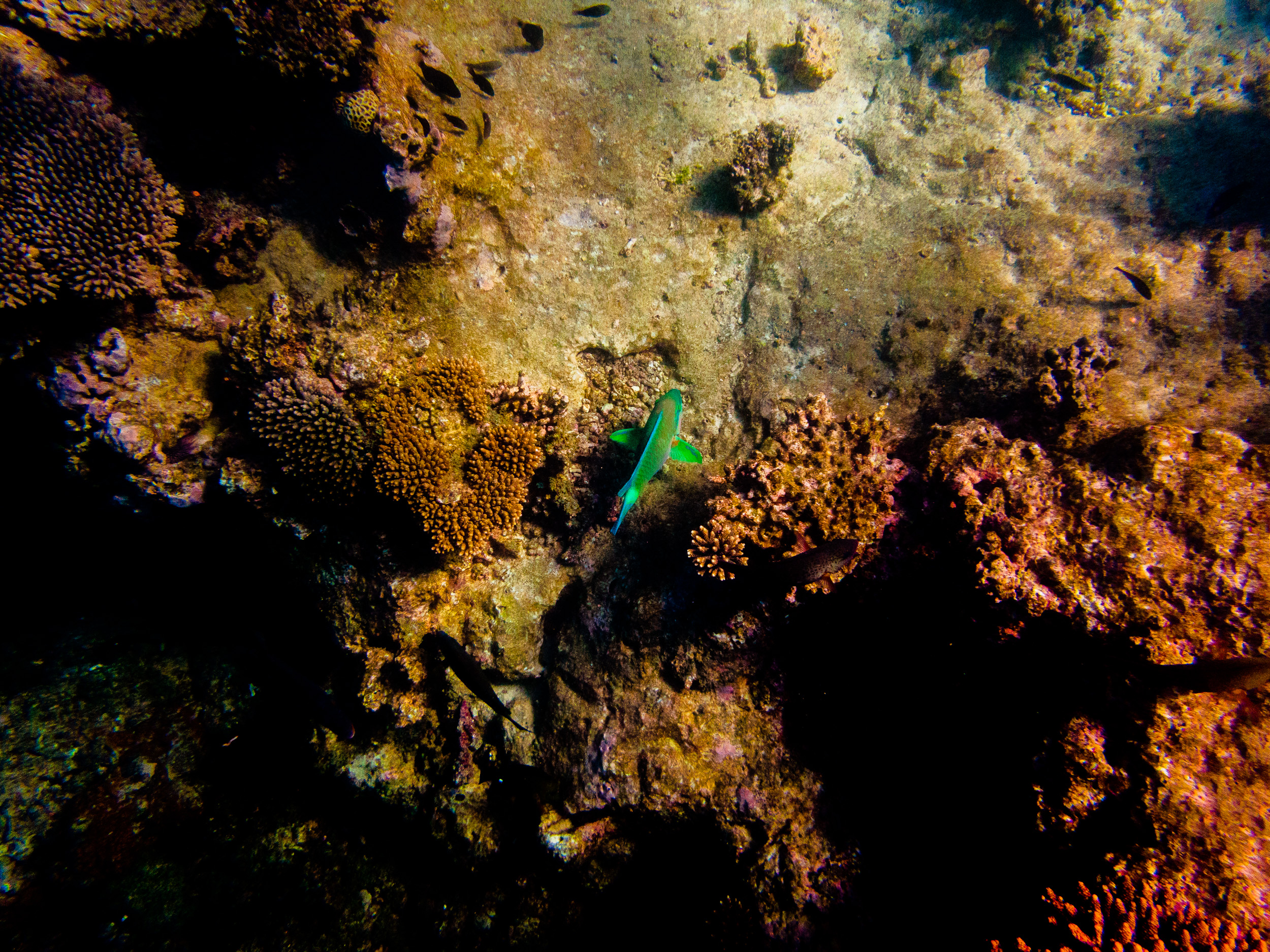 Spyrides_Kyle_Ningaloo_Reef_Sal_Salis.13.5.2016P5121622.jpg