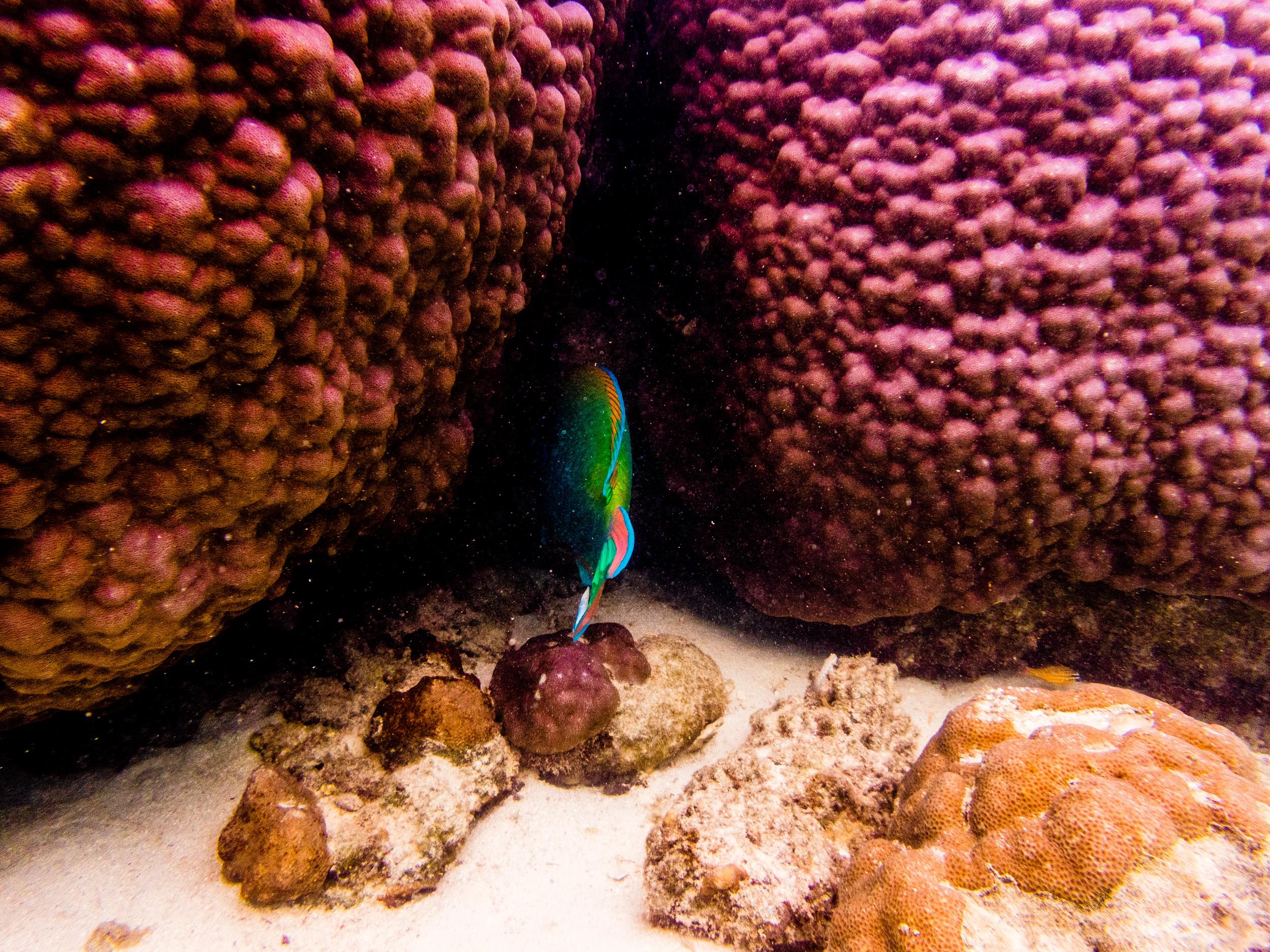 Spyrides_Kyle_Ningaloo_Reef_Sal_Salis.13.5.2016P5131858.jpg
