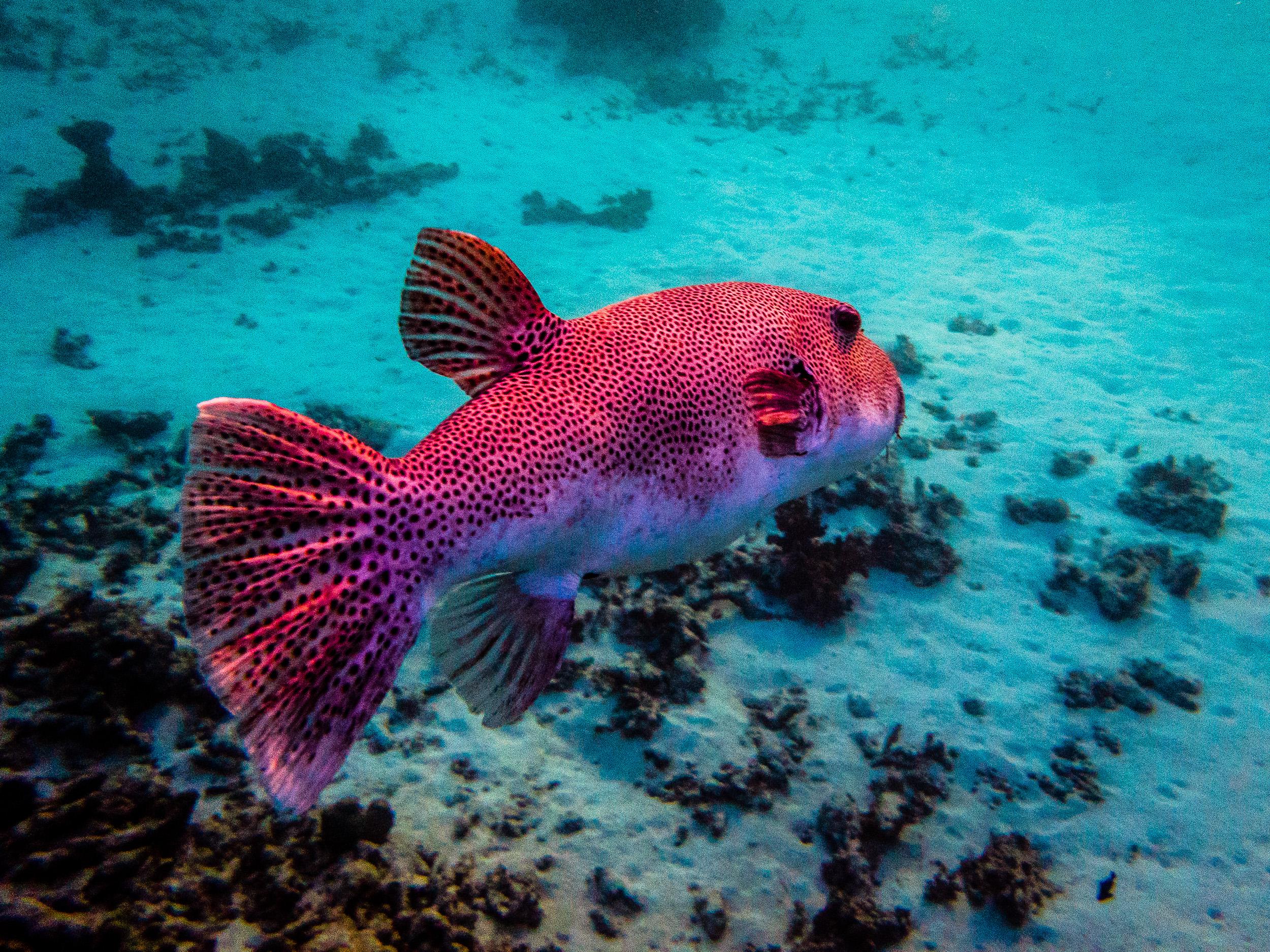 Spyrides_Kyle_Ningaloo_Reef_Sal_Salis.13.5.2016P5131864.jpg