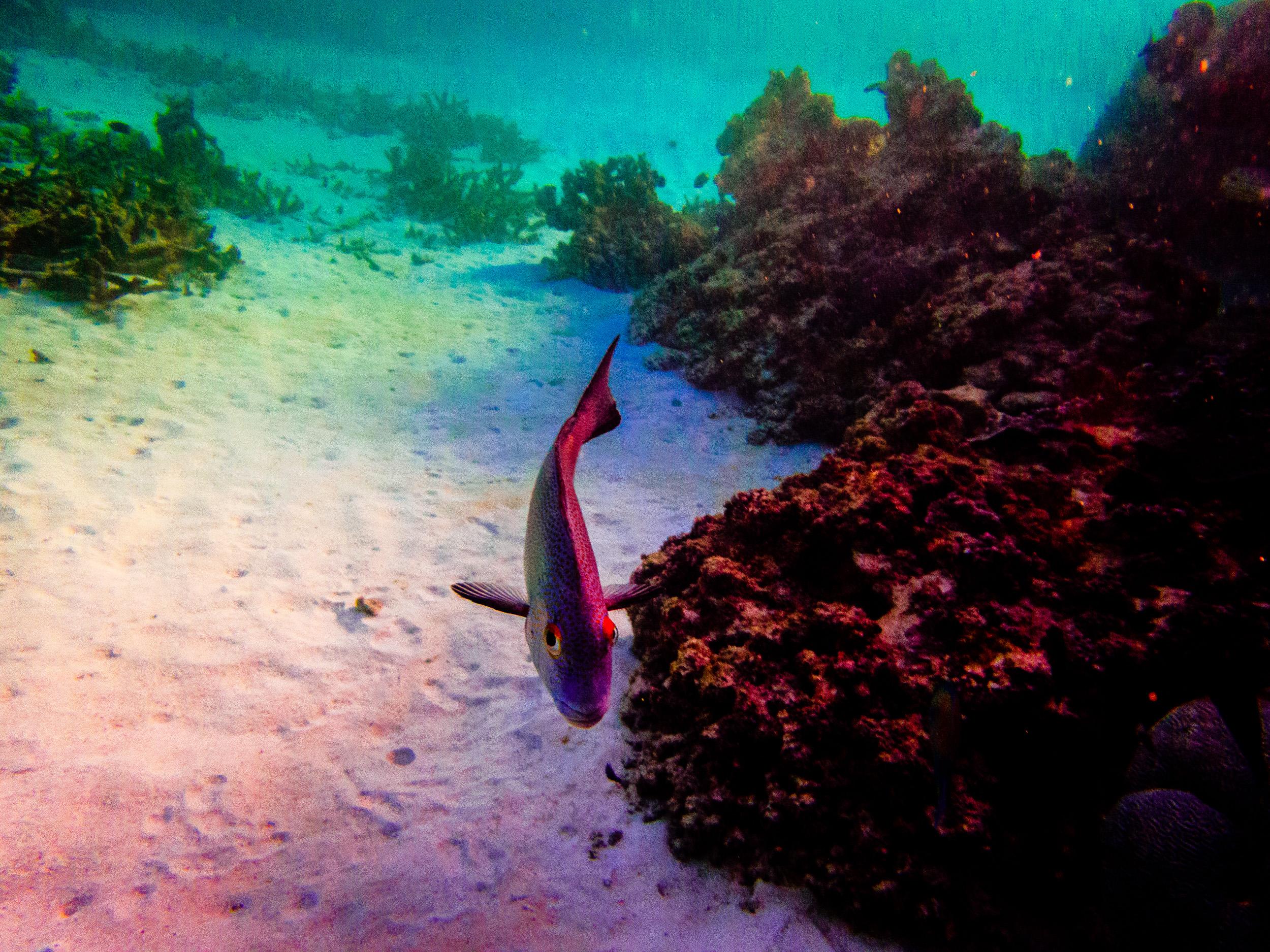 Spyrides_Kyle_Ningaloo_Reef_Sal_Salis.13.5.2016P5131891.jpg