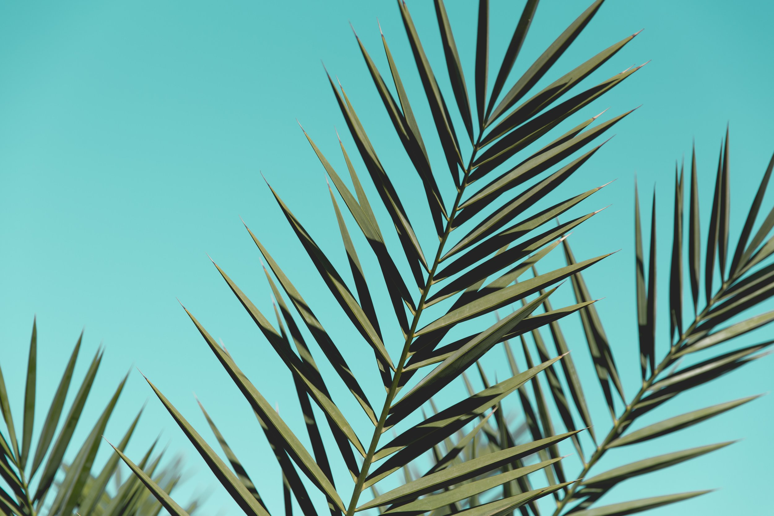 backgrounds-close-up-colors-572487.jpg