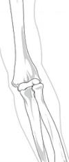 skeleton-41550_1280.png