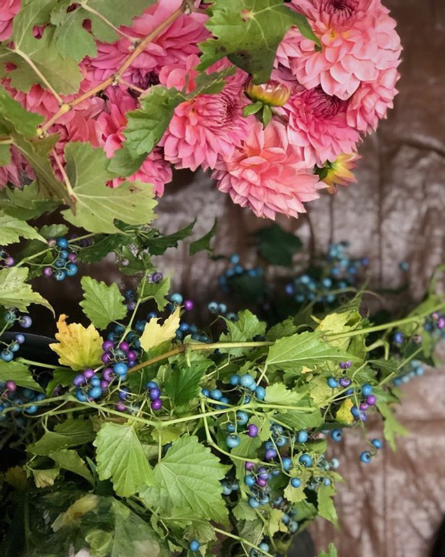 Today was a good day! . . . . . . #porcelainberry #dahlias #tistheseason #thatsdarling #underthefloralspell #vsco #vscocam #flowerstagram
