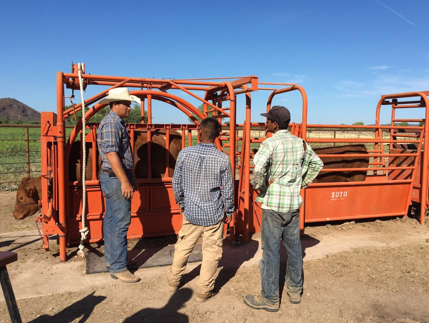 Joel and ranch employees get ready to vaccinate and brand the cattle