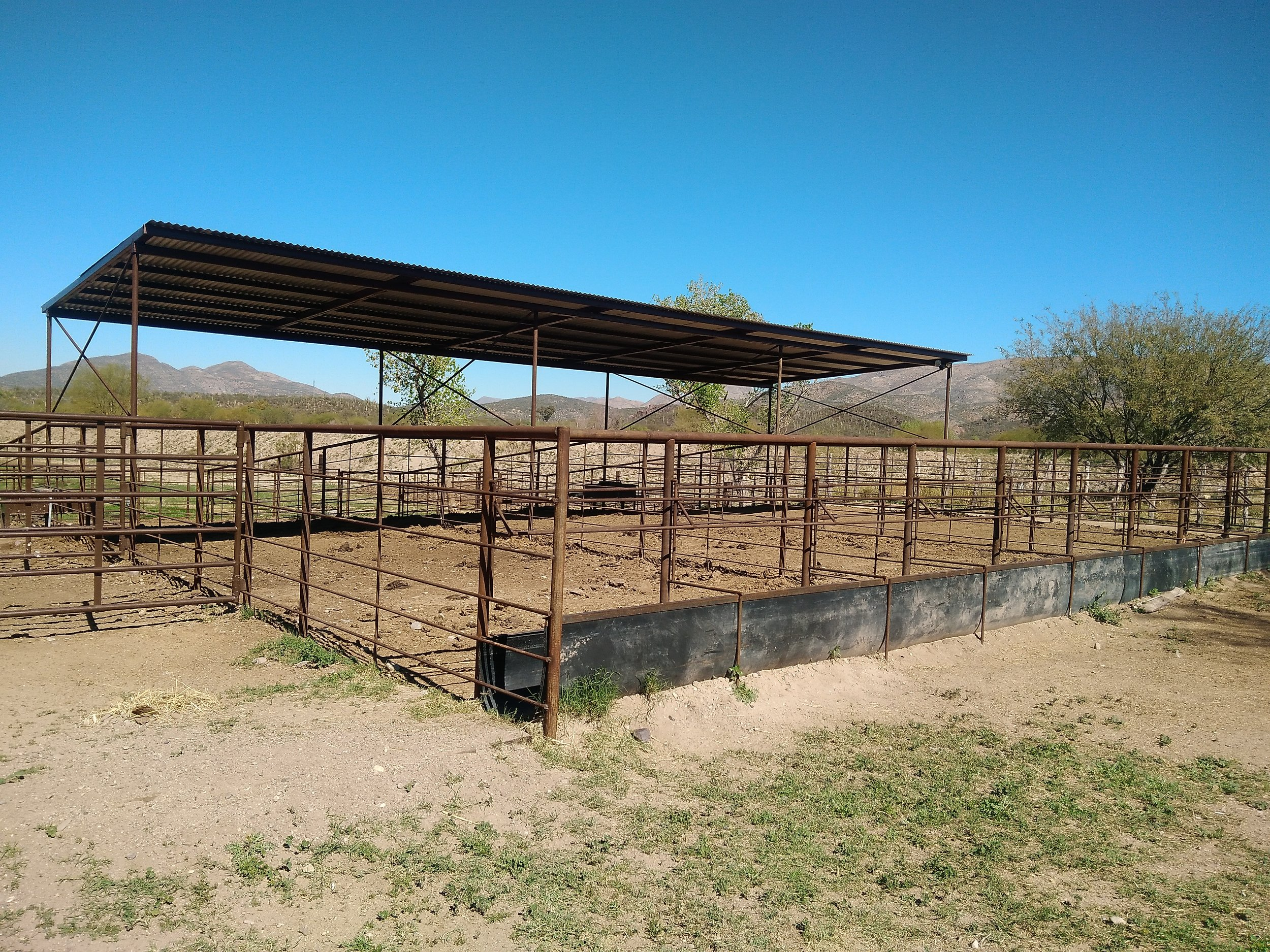 Feedlot and sorting area