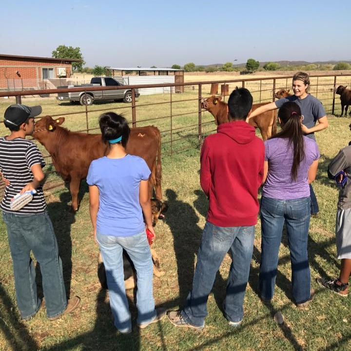Teaching safety to participants in the Cattle classes.