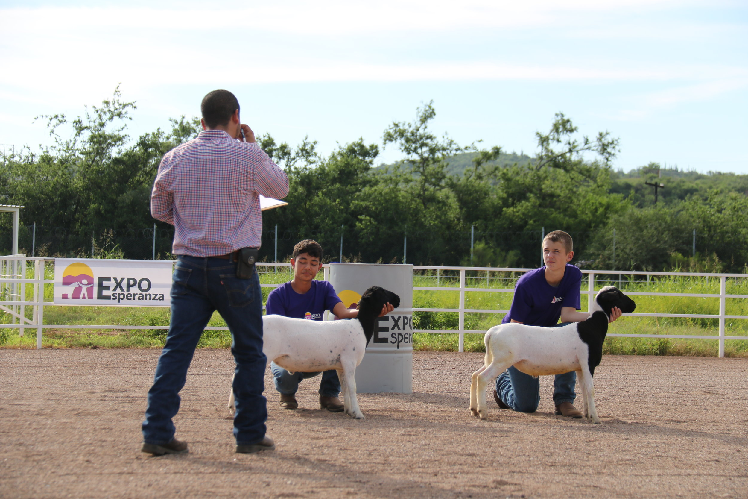 Sheep participants have 2 opportunities to show at Expo.  With the same lamb, they can show in the Showmanship and Production classes.