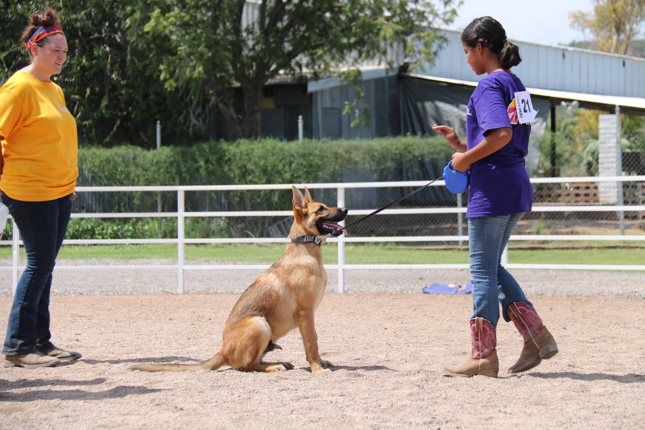 The Dog project was re-designed this year to focus more on dog obedience for Intermediate and Advanced participants.
