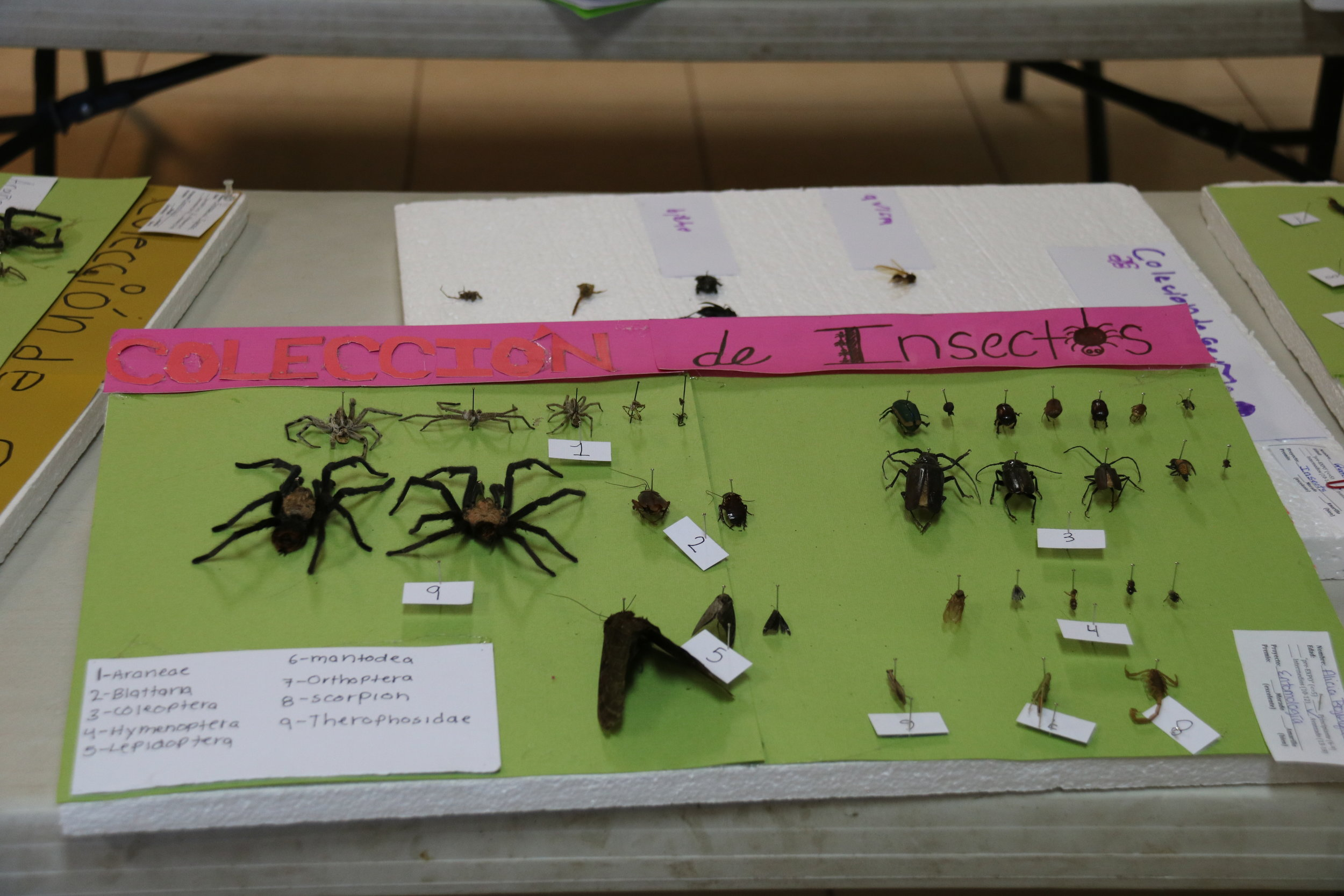 Entomology is a popular project in the Technology discipline. Other projects in Technology include Agronomy, Mecatronics, and Industrial Arts.