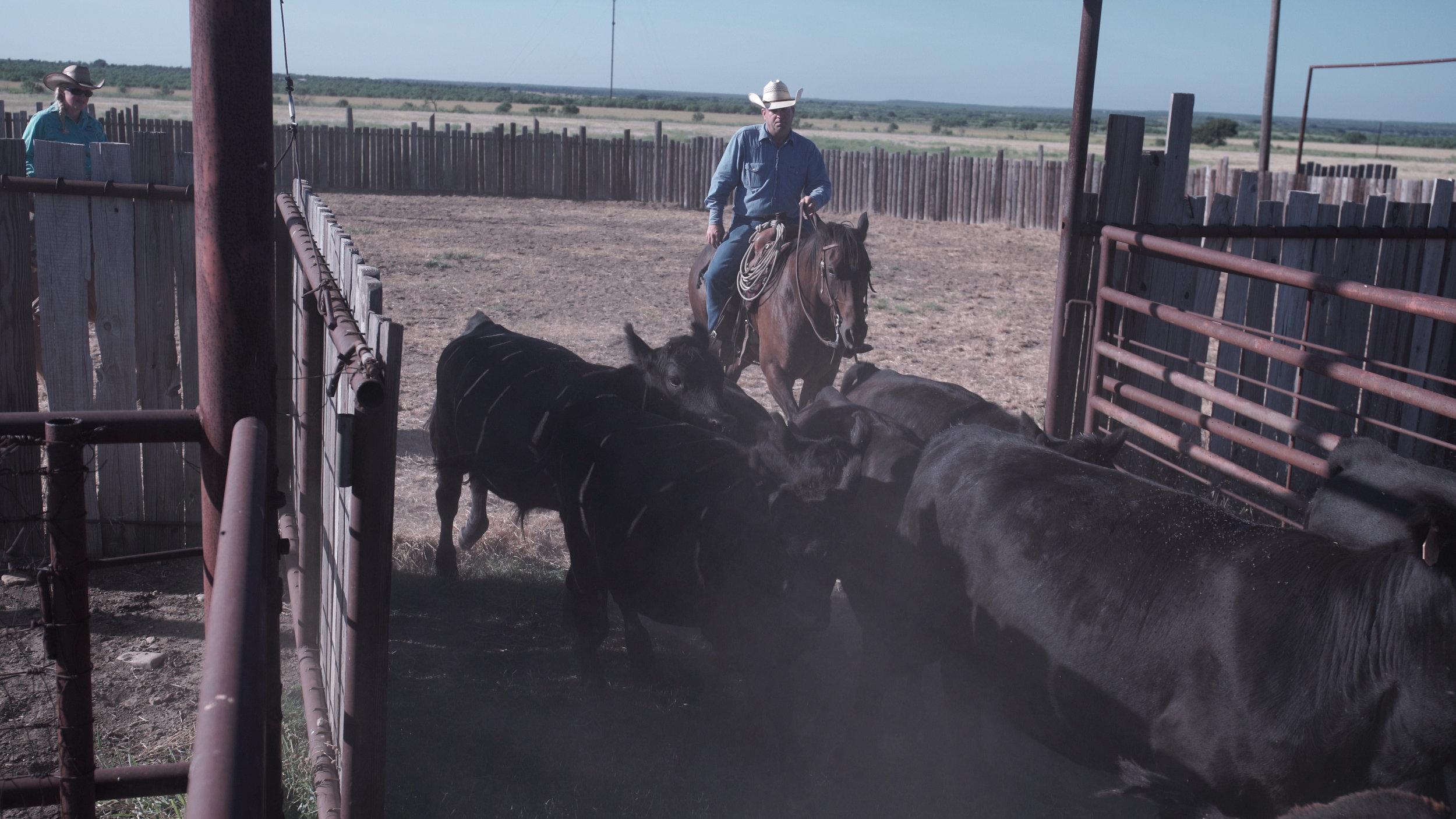 ranching6.jpg