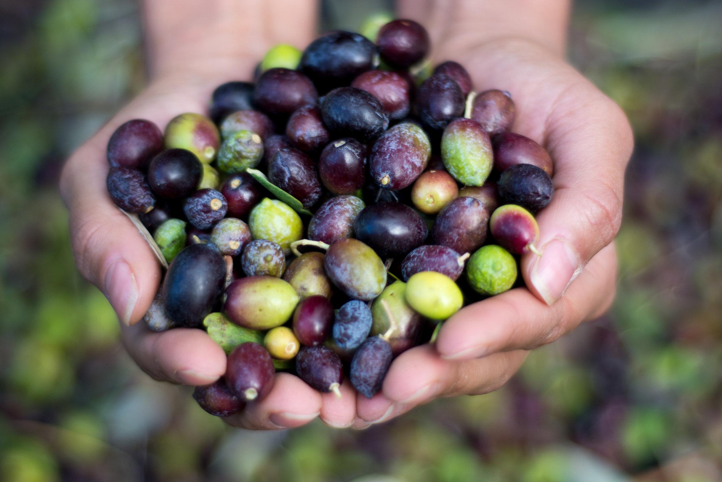 Exau Olive Oil