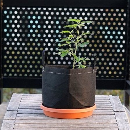 A Pot For Pot