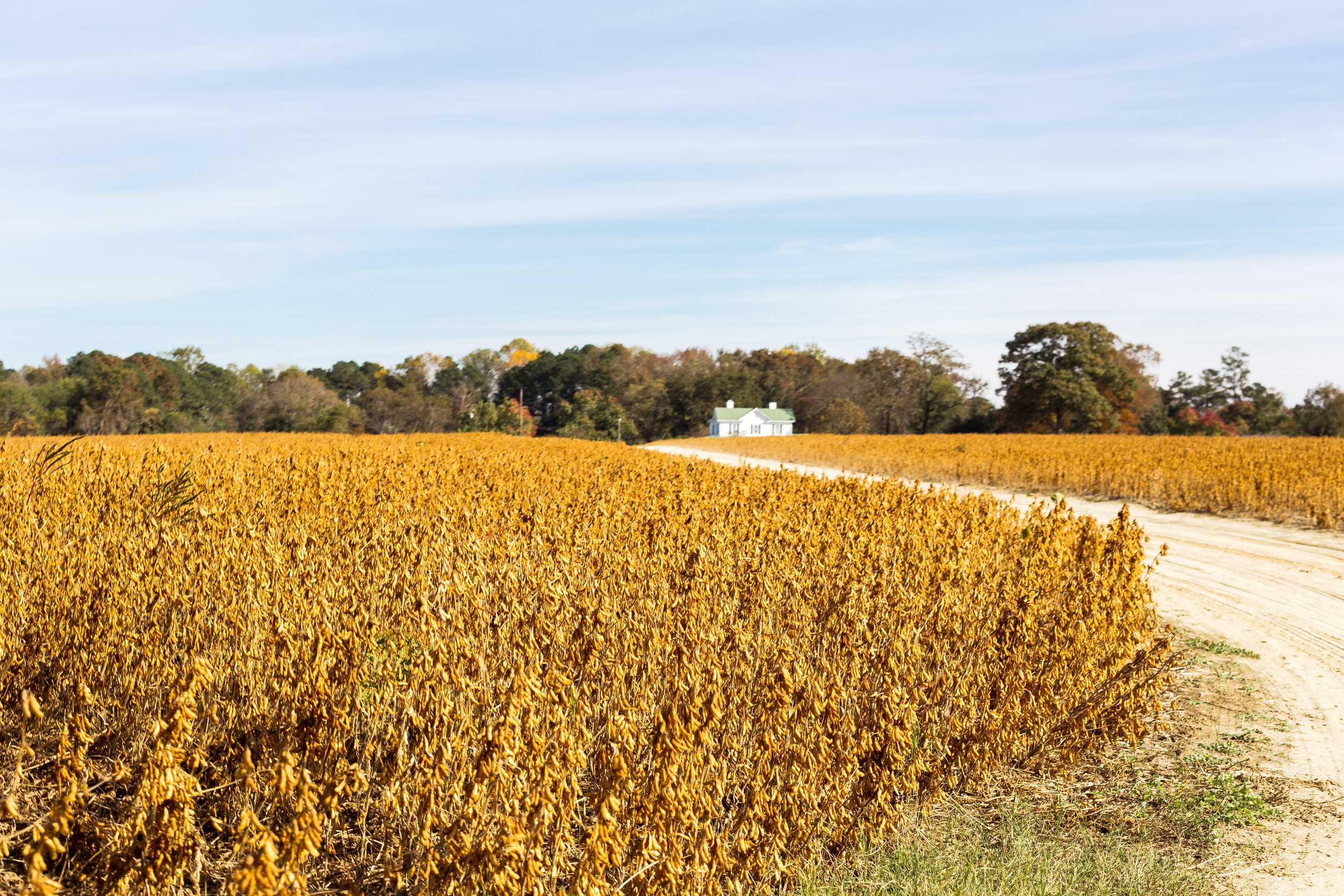 View of the farm house from the perspective of the fields.