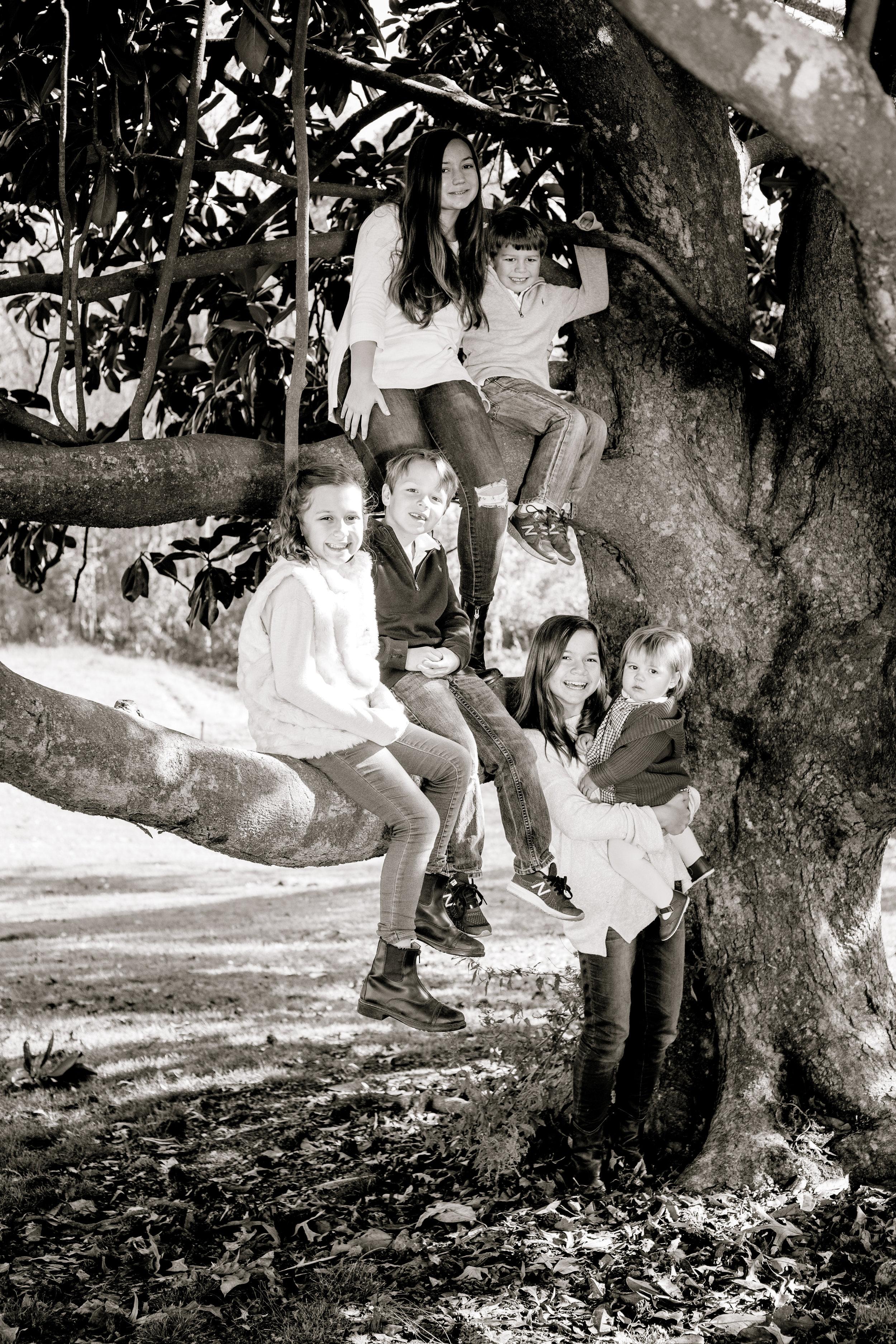 Their favorite climbing tree!