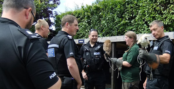 Titch the Tawny Owl and Pippin the Barn Owl display impeccable behaviour whilst sitting on the long arm of the law!
