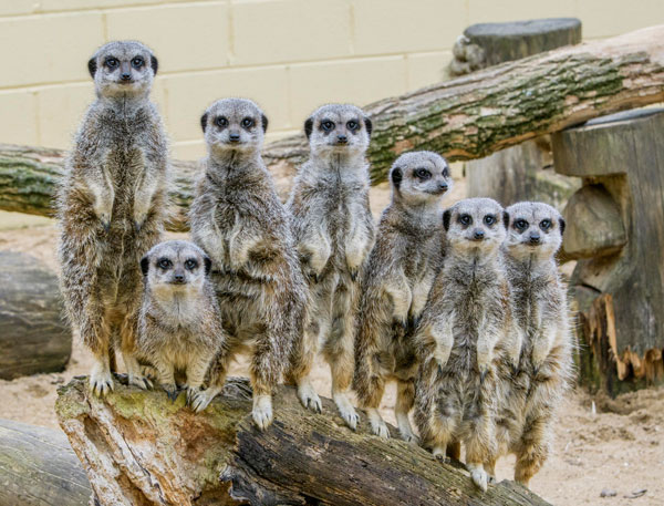 Smile please! This great photo of our inquisitive mob was taken by visitor Bob Berrisford