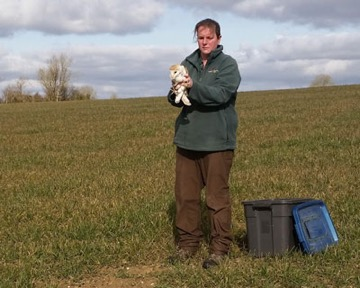 Thar she blows! - whilst Liz took a buffeting on a   particularly windy day, at least the Barn Owl   got off to a flying start as he was returned to the wild.